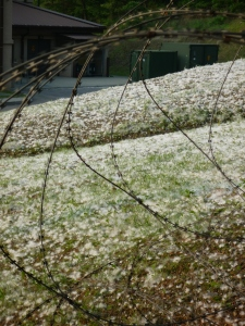 cotton looks like snow!